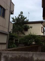 20150717tree3
